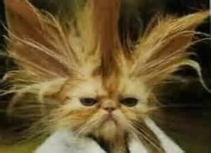 crazy cat hair