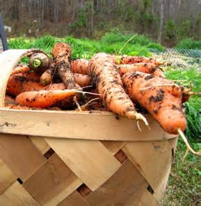 p_carrots in basket