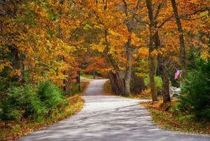 TT_fall scene