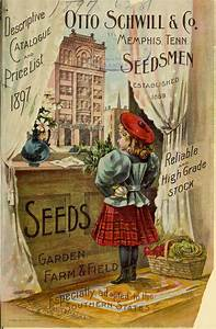 vintage seeds